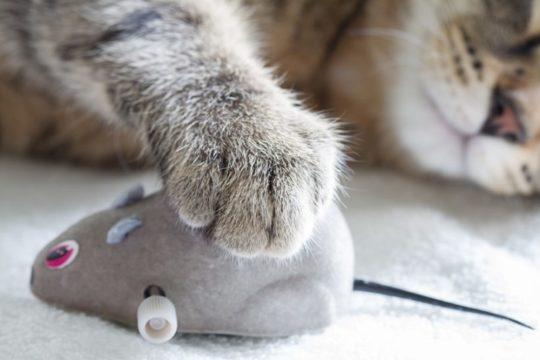 Katzenspielzeug und alles was die Katze begeistert