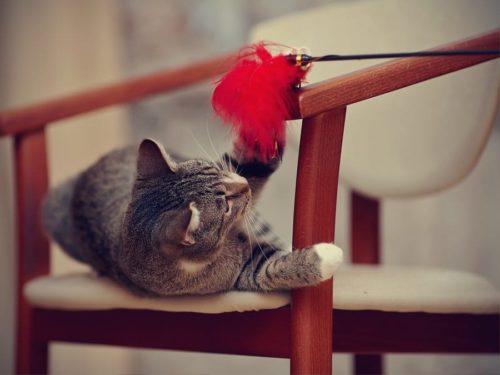 Katzenspielzeug – Spielzeug für Katzen sorgen für Spielspaß