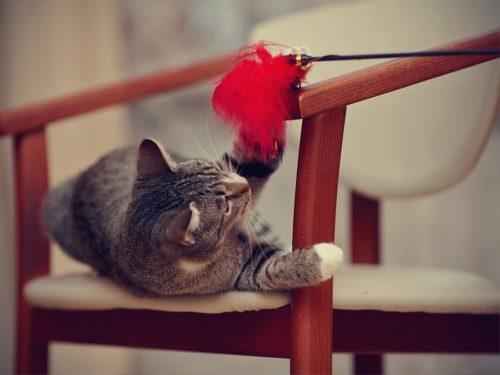 Spielzeug für Katzen: Die Spielangel weckt den Jagdtrieb in den Stubentieger