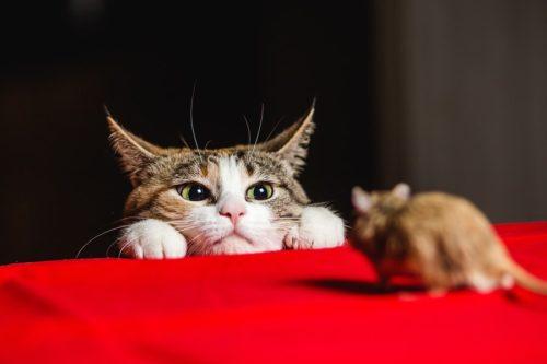 Katze auf Mausejagd