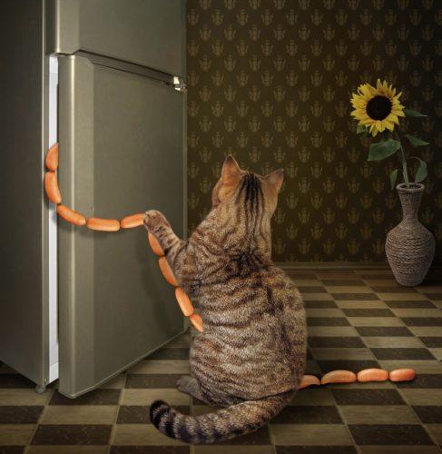 IQ bei der Katze