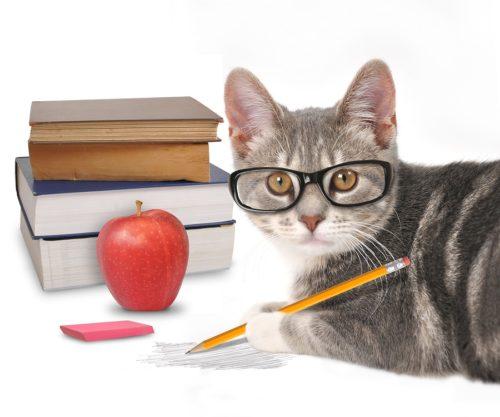 Intelligenztest bei Katzen
