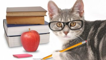 bigstock-Smart-Cat-Writing-With-Books-O-70644178_