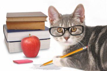 Intelligenz bei Katzen – Wie schlau ist meine Katze?