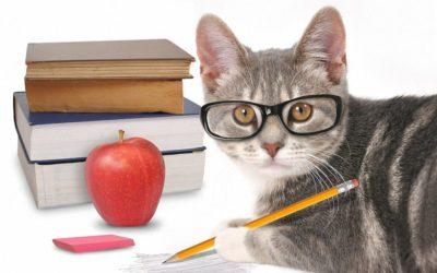 bigstock-Smart-Cat-Writing-With-Books-O-70644178_