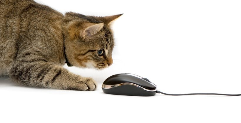 Elektronisches Spielzeug für Katzen