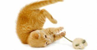 elektrisches-katzenspielzeug_