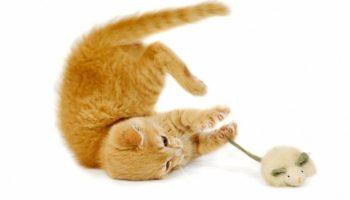 Elektrisches Katzenspielzeug als sinnvolle Alternative