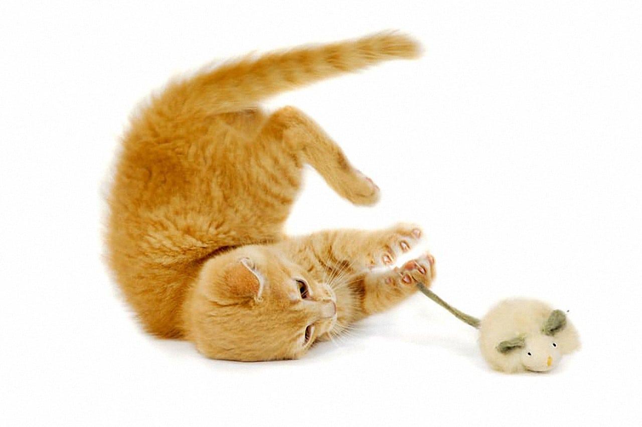 Elektrisches Katzenspielzeug Interaktives Spielzeug Katzen