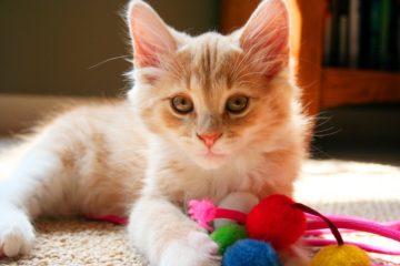 Beschäftigungsspielzeug für die Katze