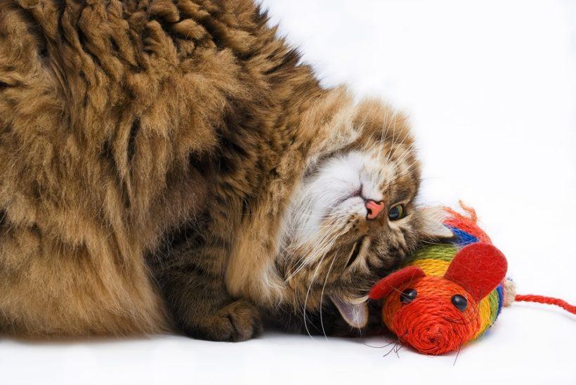 Spielzeugmäuse für Katzen