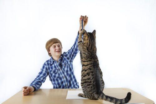 Konditionierung in der Erziehung von Katzen mit Clickern