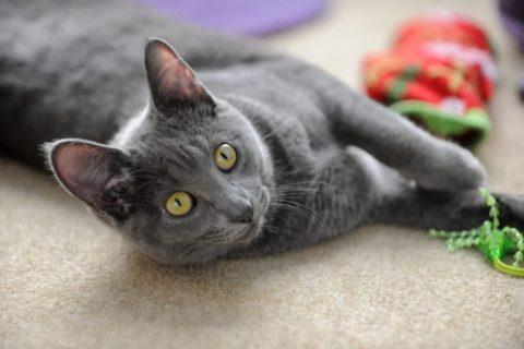 Spielzeug für Katzen mit Catnip