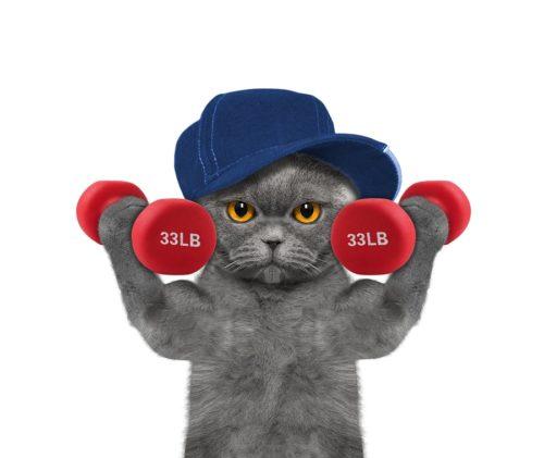 Fitnesstrainig für Katzen