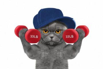 Gegen Bewegungsmangel bei der Katze – Faule Katzen zu mehr Bewegung animieren