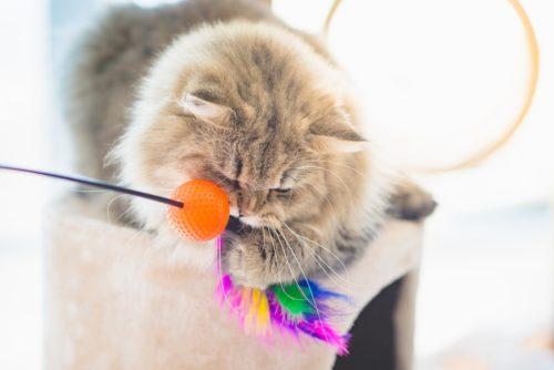 Richtig mit der Katze spielen