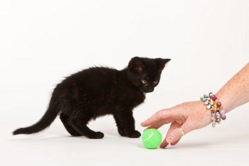 Katze zum spielen animieren