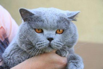 Katzenspielzeug für ältere Katzen