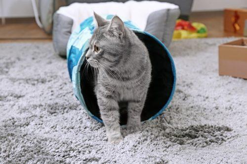 Katzentunnel - Katzenspielzeug für kleine Entdecker