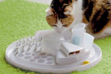 Edupet Katzenspielzeug Cat Center