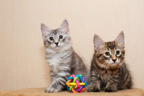 Katzenspielzeuge & Katzen Spiele - Kleiner Leitfaden