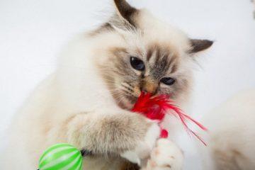Katzenspielzeuge & Katzen Spiele