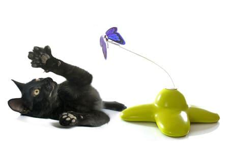 Katzenspielzeug für Kitten - Womit spielen Katzenbabys gerne