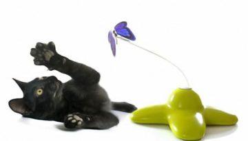 katzenspielzeug-fuer-kitten_