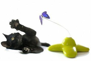 Welches Katzenspielzeug ist für Kitten empfehlenswert?