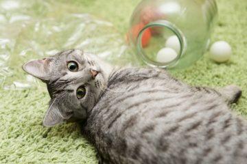 Katzenspielzeug selber machen – leicht und lustig