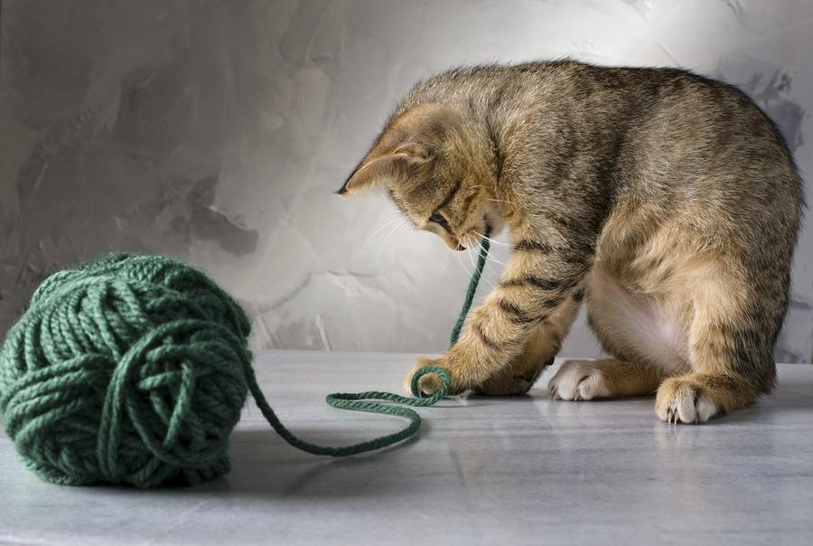 Spielzeug für die Katze basteln