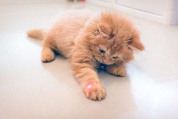 Laserpointer für Katzen – Was taugt es als Katzenspielzeug?