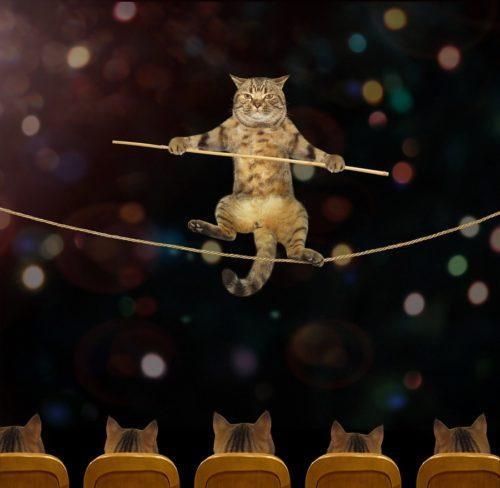 Katze Tricks und Kunstücke beibringen