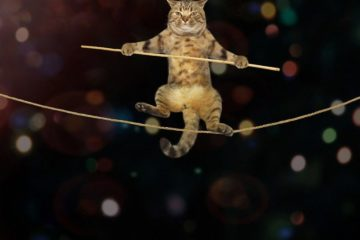 Kann man eine Katze wirklich trainieren? Tipps & Tricks
