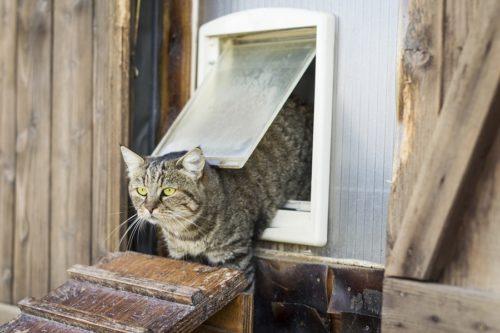 Katzenklappen für Freigänger Katzen