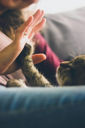 Katze an Katzenklappe gewöhnen