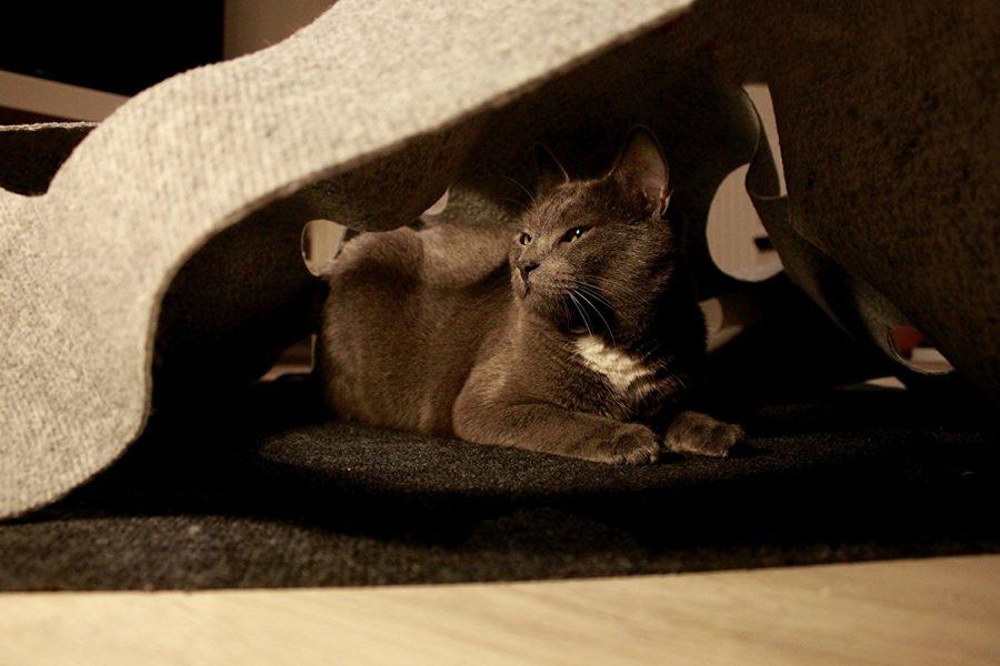 Katzenmatte, Kombinierbar mit anderen Spielzeugen