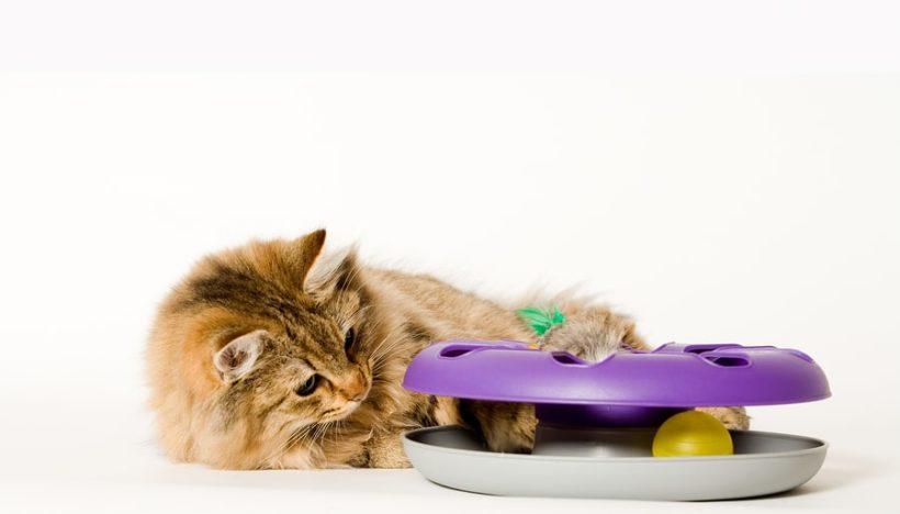 sich bewegende Katzenspielzeuge