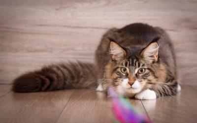 katzenspielzeug-jagdinstinkt_