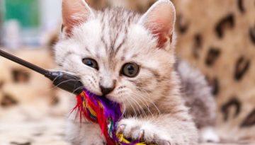 Katzenspielzeug ist wichtig von klein auf