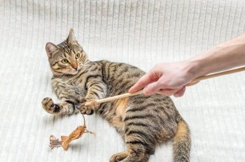 Katzen lieben es zu spielen