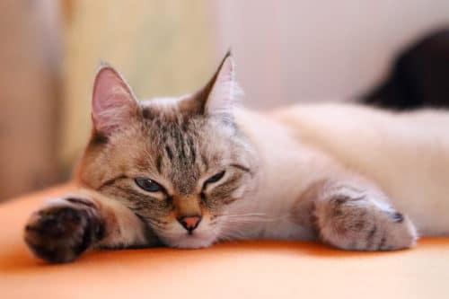 Katze mit Depressionen