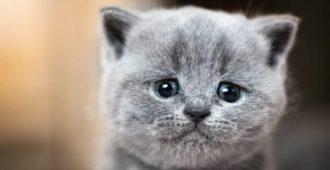 Depressive Katzen
