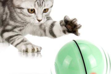 Selbstdrehender 360-Grad-Ball mit LED-Licht – Interaktives Katzenspielzeug