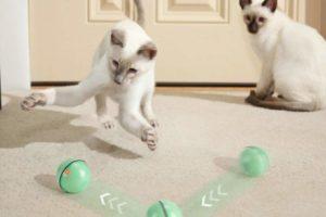 wwvvpet-interaktives-katzenspielzeug-3