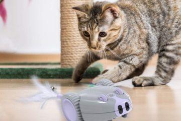 DADYPET Katzenspielzeug – Roboter Maus für die Katze