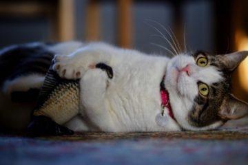 Tanzender Fisch für Katzen – Katzenspielzeug mit Spaßfaktor