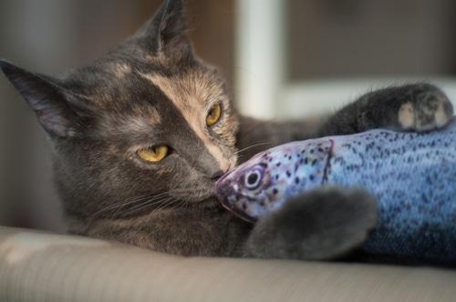 Katzen mit Fischspielzeug