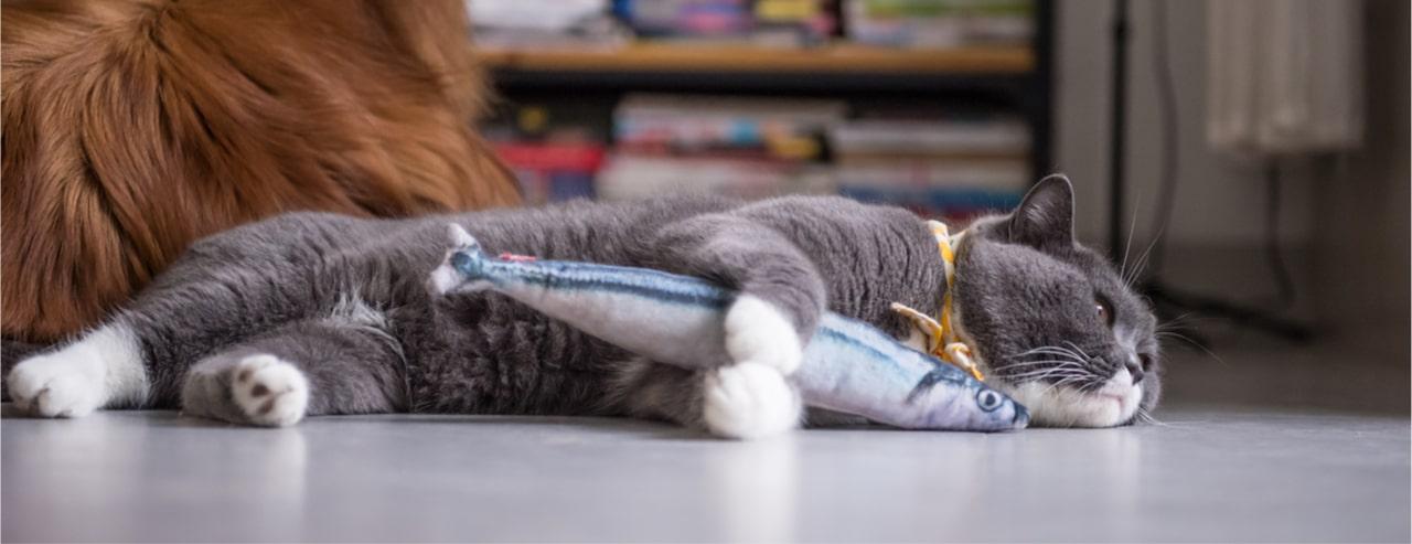 Katzenfisch - Spielzeugfisch für Katzen