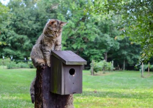 Katze jagt Vögel